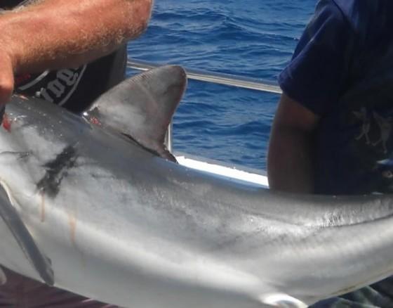 shark-fishing-vilamoura