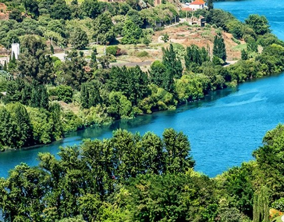 Long Cruise to Regua on the Douro River